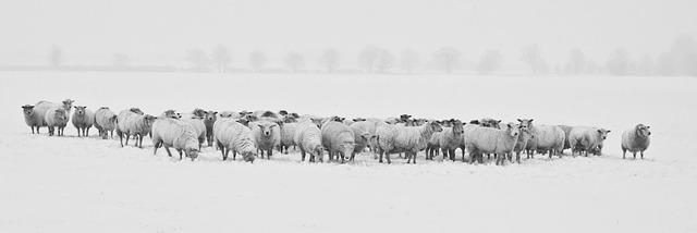 winter-1142029_640